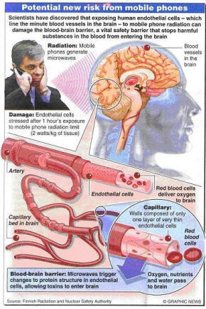 This is Your Brain on Cell Phones