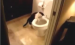 The Unedited Flushing Cat Video